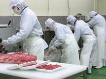 プレコ豚工場